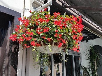 Custom Hanging Baskets - City of Sydney shopfront.jpg