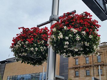 Custom Hanging Baskets - outside Australian Museum - City of Sydney.jpg