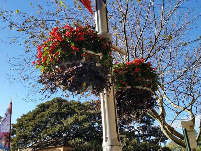 Flower Baskets, Living Colour - City of Sydney